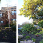 Before & After: Removed portion of fence along the side of house and rebuilt to include side yard in backyard. Also repainted entire fence.